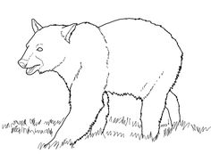 Learn Forest Animals Coloring Pages Grizzly Bear Proficiency