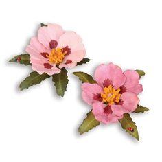 Image result for cistus flower