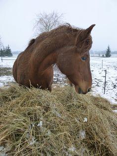 Ponymix, winter