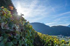 Weinlese in Aigle – eins von tausend Abenteuer im Waadtland | Schweiz