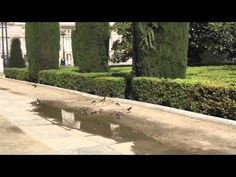 Aviones Comunes en la Plaza de Oriente de Madrid. Por Caty Arévalo