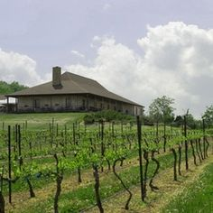 Chaumette Winery // #fruitofthevine
