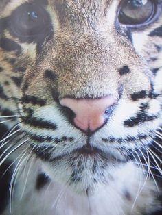big meow