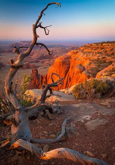 ✯ Dead tree on Hunt's Mesa in Monument Valley, AZ