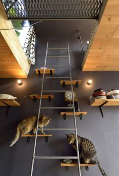living in the 2.5m*11m house with three cats