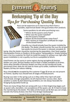 Beekeeping Tip of the Day - Tips for Purchasing Quality Nucs