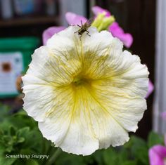 Pretty yellow flower with a fly on it.
