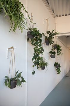 Over 40 ideas for the hottest hanging plants at year end hanging plant . - Over 40 ideas for the hottest hanging plants at year end hanging plants indoor ideas diy projects # - Garden Care, Garden Beds, Big Garden, Indoor Garden, Indoor Plants, Wall Hanging Plants Indoor, Indoor Outdoor, Hanging Plant Diy, Plant Wall Diy