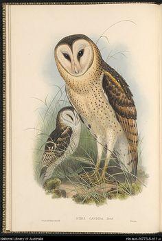 John Gould. Birds of Australia.