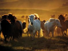 Western Horse Wallpaper For Mac #HTd