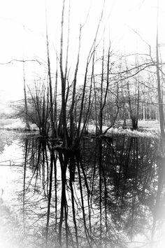 Spandauer Forst