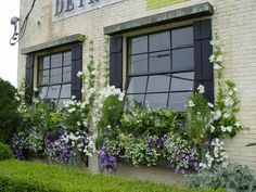 lavender and white windowboxes