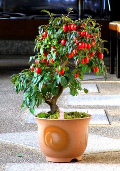 ろうあ柿、都紅 by花翠