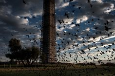 A flock of birds swoops past the Washington Monument early Nov. 2.