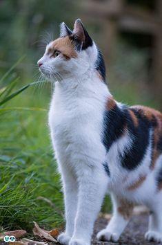 Funny Cats, Funny Animals, Cute Animals, Animal Memes, Baby Animals, Beautiful Cat Breeds, Beautiful Cats, Cute Cats And Kittens, Kittens Cutest