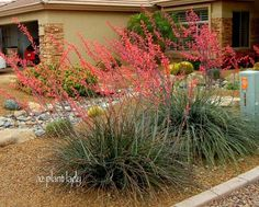 """Red Yucca"" is not a true yucca but does handle temps as low as yet withstands heat and survives on only 2 waterings per month. ""Red Yucca"" is not a true yucca but does handle tem Backyard Garden Landscape, Small Backyard Gardens, Sloped Backyard, Succulent Landscaping, Front Yard Landscaping, Landscaping Ideas, Landscaping Software, Low Maintenance Landscaping, Low Maintenance Garden"