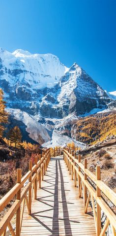 Colorful autumn with mt. Chenrezig and wooden walkway in Yading national level reserve, Daocheng, Sichuan Province, China.