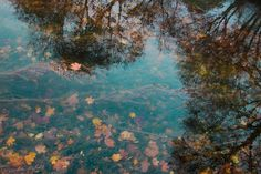 Fall reflections. #reflections #water #leaves #leaf #tree #reflect #fall #autumn #islands #photo #photograph