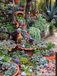 succulents beautifully combined to form a lush garden., Containers of succulents beautifully combined to form a lush garden., Containers of succulents beautifully combined to form a lush garden. Small Front Yard Landscaping, Succulent Landscaping, Succulent Gardening, Cacti And Succulents, Planting Succulents, Garden Plants, Garden Landscaping, Landscaping Ideas, Succulent Rock Garden