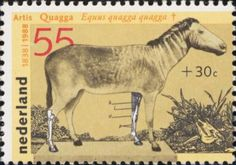 Stamp of an extinct species: the Quagga