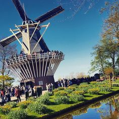 Windmill in Holland...so cool.  #tulipseason #holland by wendee_michelle