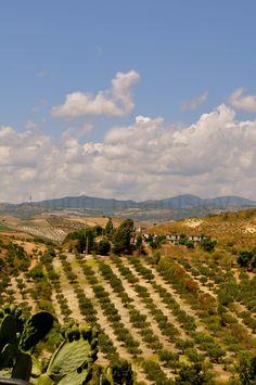 Sellia Marina (Calabria) Italy  Farm.  ~ My Mom was born and raised on a farm in Calabria!