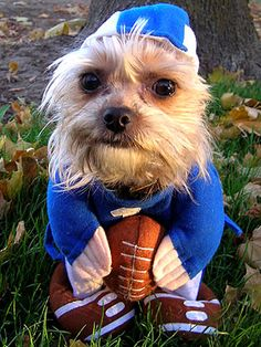 12 Dogs (Almost) Ready For The Football Season ... #pets #animals ... PetsLady.com
