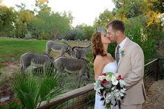 "Haven't you ""herd"" wedding at the Phoenix Zoo are fantastic!"