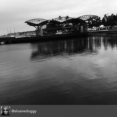Repost from @sloanedoggy #geelong #geelongwaterfront #carousel #reflection #bnw_magazine #bnw_australia #bnw_rose  #best_expression_bnw #werepostbnw #7bnwcreation_1day #fotofanatics_bnw_ #photo_storee_bw #tourist #gtown #water #melbournetouristguide #australia #igers #instagood #instagood #photography #mycitylife_bnw #fish #glass #bnw #melbourne by melbournetouristguide http://ift.tt/1JtS0vo