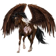 Hi I'm eagle spirt, male, no mate or foals, i love impressing the mares by doing tricks while flying and sharpening my hooves, I can speak eagle too.
