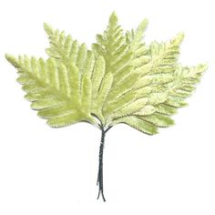 Set of 6 Small Pale Green Velvet Fern Leaves ~ Czech Repub.