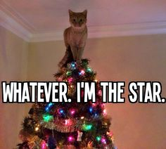 Every cat...every year.