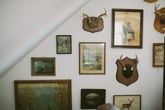 Vintage antlers and old photographs