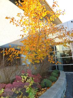 fall in the healing garden