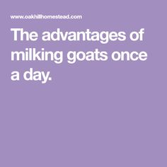 The advantages of milking goats once a day.