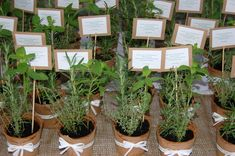 herbs in terra cotta as place card holders or party favors Unisex Baby Shower, Best Wedding Favors, Wedding Stuff, Event Signage, Flower Centerpieces, Holidays And Events, Event Design, Flower Pots, Event Planning