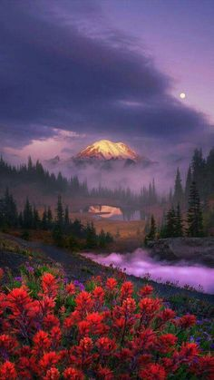 """Sunrise light illuminates Mount Rainier"", by Alex Noriega.   Mount Rainier rises above low clouds, seen from high above Tipsoo Lake."