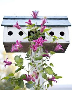 A healthy, welcoming garden will attract birds in abundance