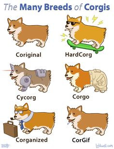 #corgis are the Internet's favorite dog.