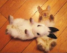 This is actually a mild kind of animal cruelty - sure they look Hella cute, but when you put a bunny/Rabbit on its back, it gets paralyzed and unanble to move. Funny Bunnies, Baby Bunnies, Cute Bunny, Adorable Bunnies, Bunny Bunny, Bunny Rabbits, Cute Baby Animals, Animals And Pets, Funny Animals