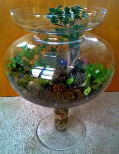 Very whimsically shaped terrarium--with tiny pond inside!
