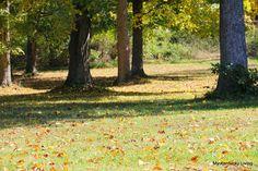 My Kentucky Living : October 2014