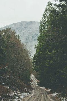 mountains/trees