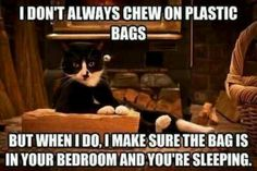 Every cat I've ever owned did this.