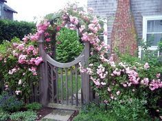 Pass through this gate to see my passion, my heart... my garden. pink roses, secret gardens, arbors, garden gates, climbing roses, side yards - all welcome.
