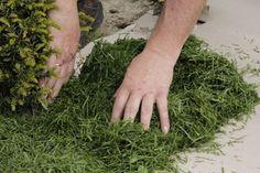 Succulents, Herbs, Outdoor Decor, Plants, Gardens, Garden Walls, Cactus, Lawn And Garden, Succulent Plants