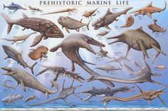 A wonderful poster of Prehistoric Marine Life - the dinosaurs who inhabited the mysterious deep-sea world of Prehistory! Fully licensed. Ships fast. 24x36 inche
