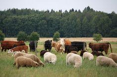 Haltialan tilalla pääsee ihmettelemään erilaisten kotieläinten elämää ympäri vuoden.
