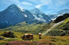 Notre séjour dans l'Oberland Bernois en famille, pour faire de la randonnée (avec des enfants!). camp de base à Lauterbrunnen.