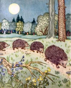 ilclanmariapia: illustrators-kids Illustration Youngsters obtain Hedgehog Illustration, Children's Book Illustration, Animal Illustrations, Vintage Illustrations, Woodland Creatures, Woodland Animals, Hedgehog Art, Watercolor Art, Cute Animals